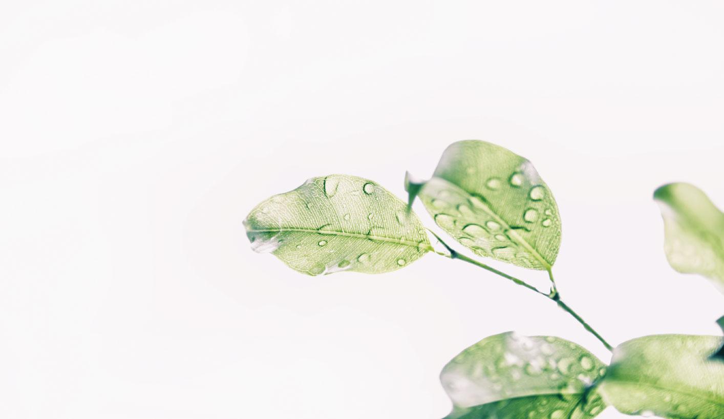 GREEN-BANNER-FULL