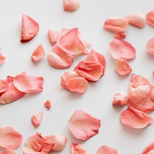 Rose-Petals-2